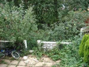 Clearance of extremely overgrown patio garden